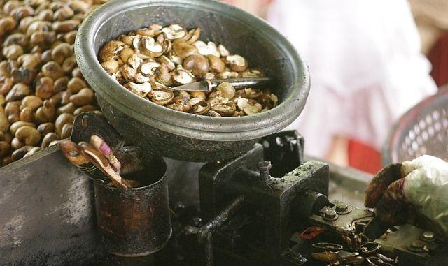 cashew-nuts-254061