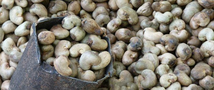 cashew-nut-52064